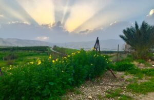 The Jordan Valley (Photo by Andrea Levin)